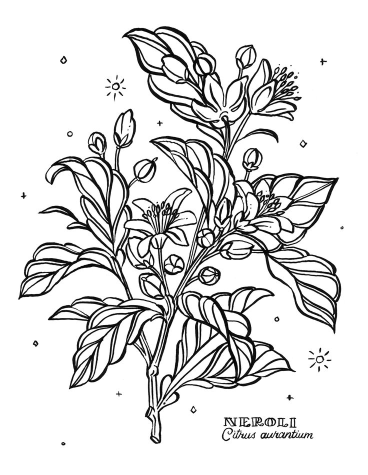 Coloring Book For Adults Colors Of Calm By Egle