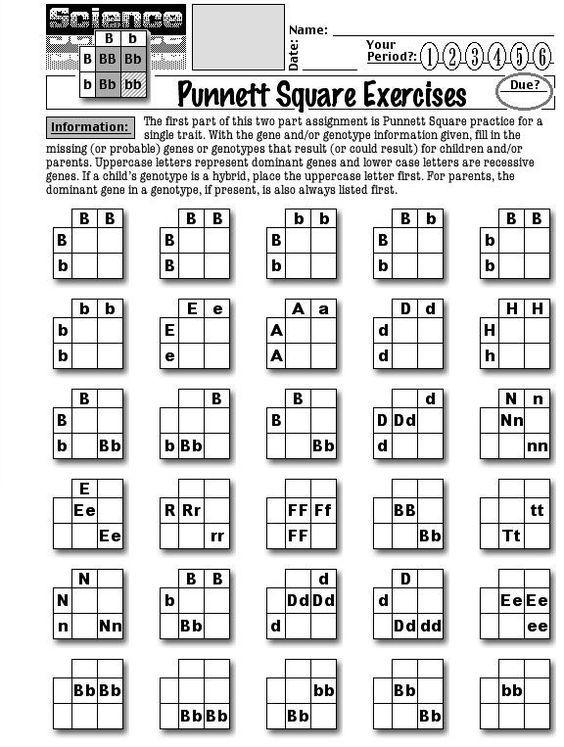 25+ best ideas about Punnett Square Activity on Pinterest