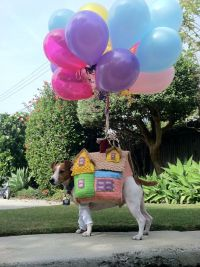 DIY Dog Costume from Disney's UP | Disney Pets | Pinterest ...