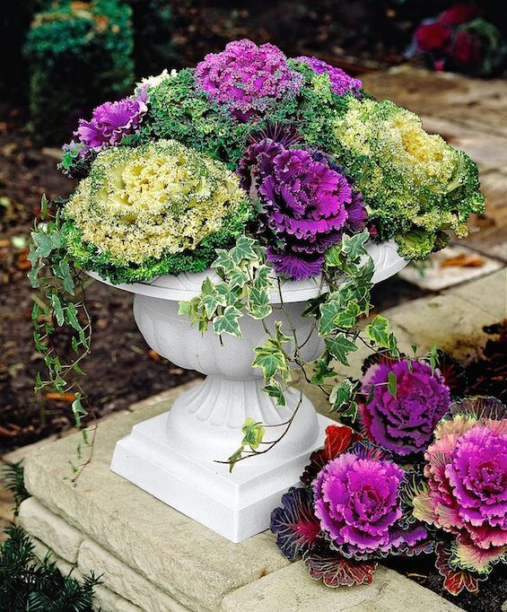 25 Best Ideas About Fall Container Gardening On Pinterest Fall