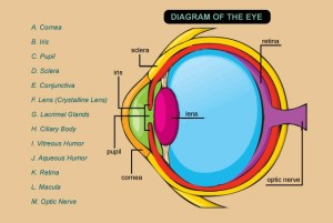 optometry humor |  Vitreous Humor; J Aqueous Humor; K