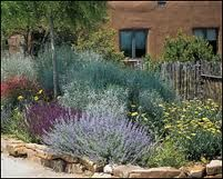 34 Best Images About Texas Landscaping Ideas On Pinterest Green