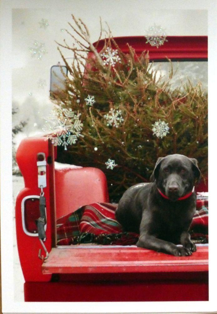 1000 Ideas About Black Labrador Retriever On Pinterest