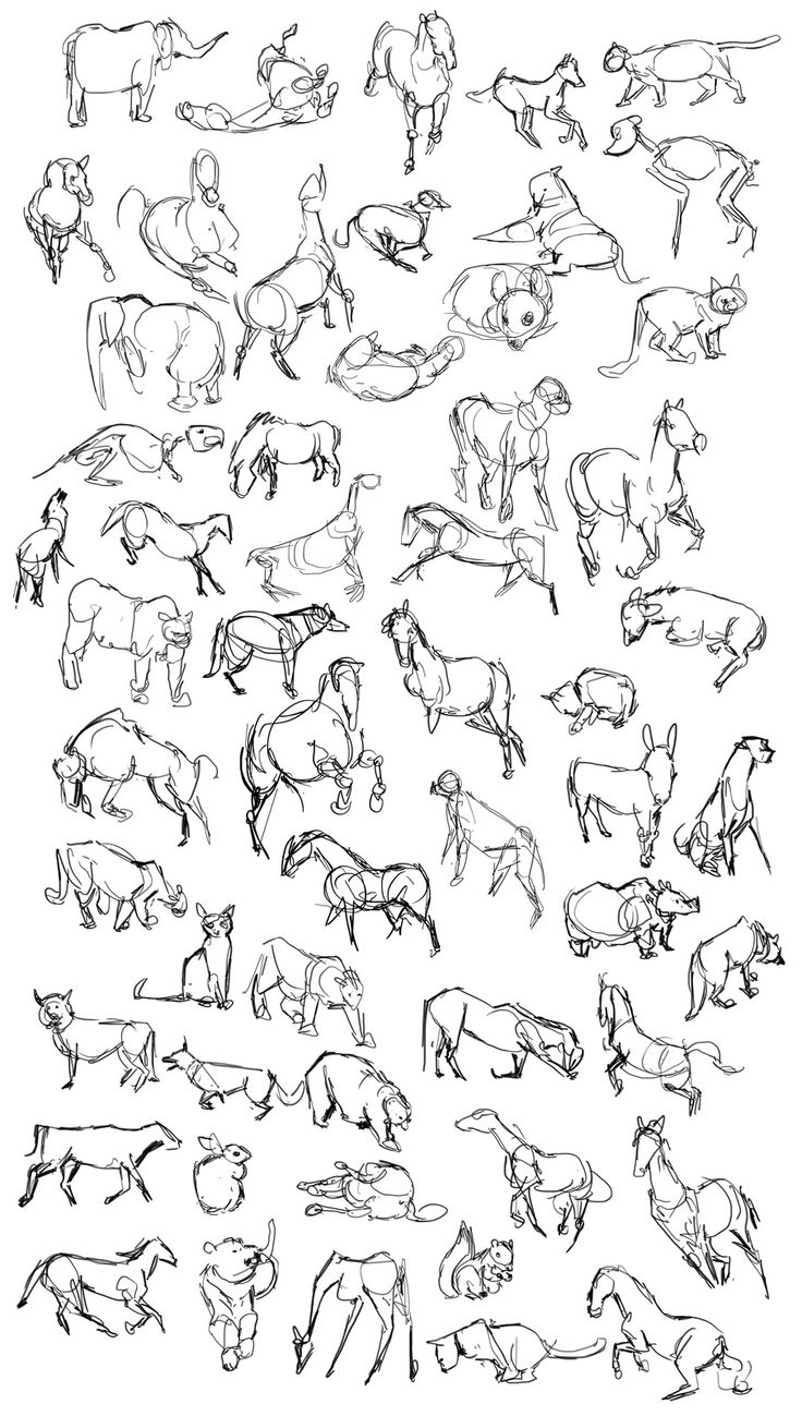 1000+ ideas about Easy Animal Drawings on Pinterest