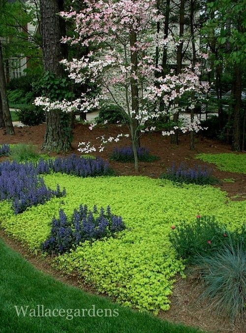 165 Best Images About Garden Groundcover Walkable Plants On