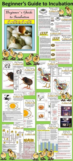 Incubation Packet Bundle | Activities, A chicken and