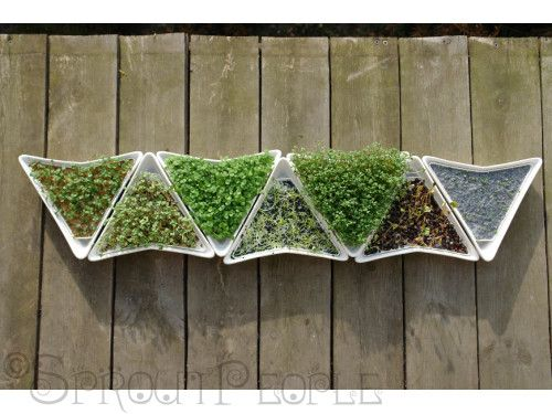 Euro Tray Sprouter SPROutS Amp MICrO GREenS MANIA