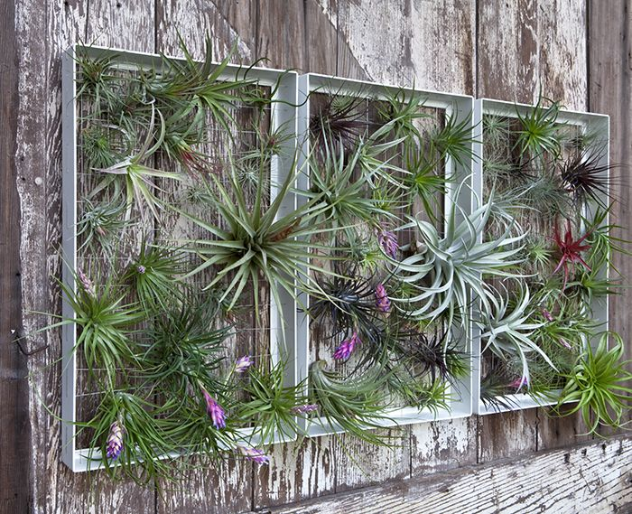 793 Best Images About VertiCal GarDens On Pinterest Vertical