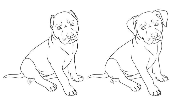 250 best images about Dog Coloring Pages on Pinterest