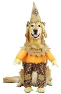 Details about Dog Costume Scarecrow Pet Puppy Halloween ...