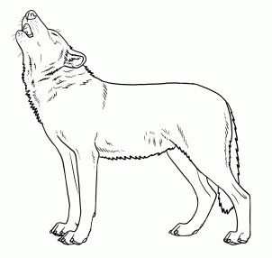 17 Best ideas about Wolf Howling Drawing on Pinterest
