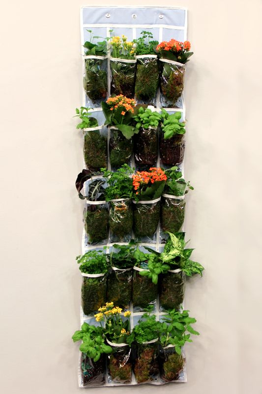 Hanging Shoe Organizer turned Herb Garden  Life Made Easy