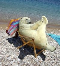 polar bear relaxing in beach chair | Cute animals ...
