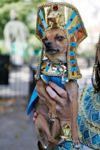 25+ best ideas about Egyptian costume on Pinterest