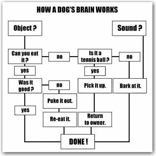80 best I just love flow charts images on Pinterest