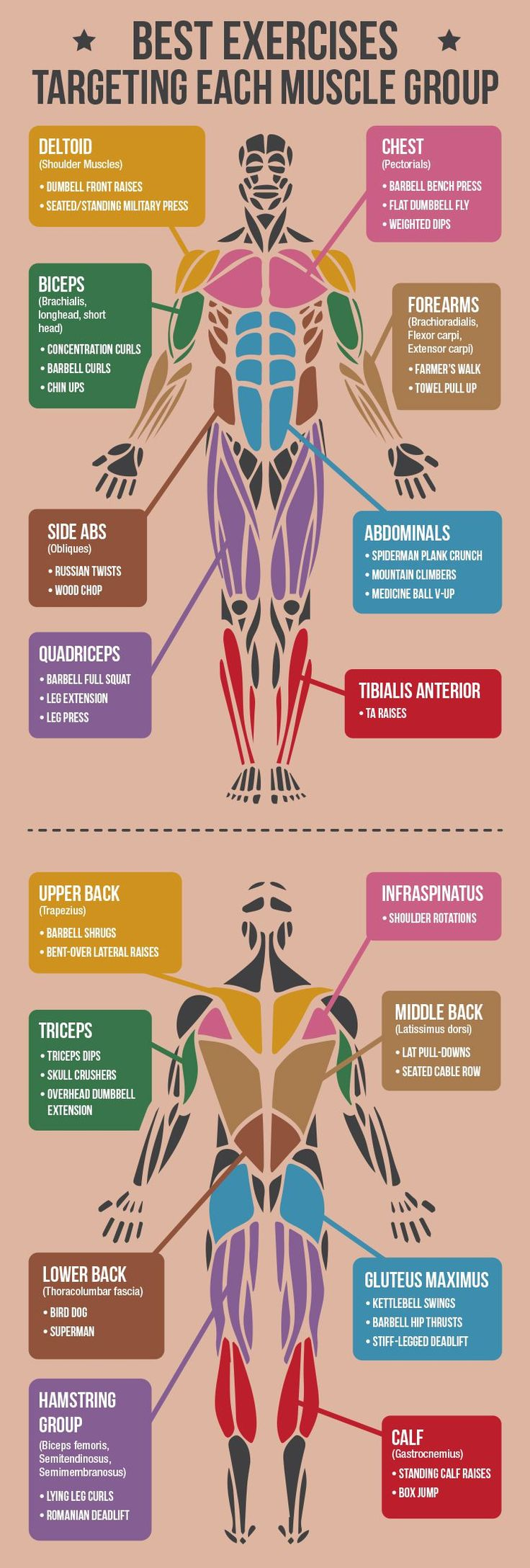 *CLICK FOR ALL EXERCISES* Best Exercises Targeting Each Muscle Group