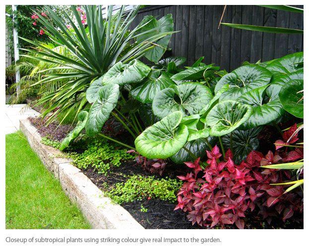 Subtropical Garden Design Google Search Landscaping Ideas