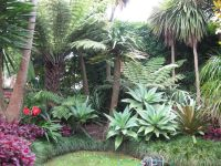 17 Best ideas about Tropical Garden Design on Pinterest ...