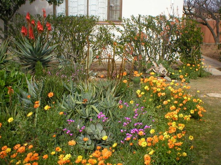 40 Best Images About Indigenous Gardens On Pinterest Gardens