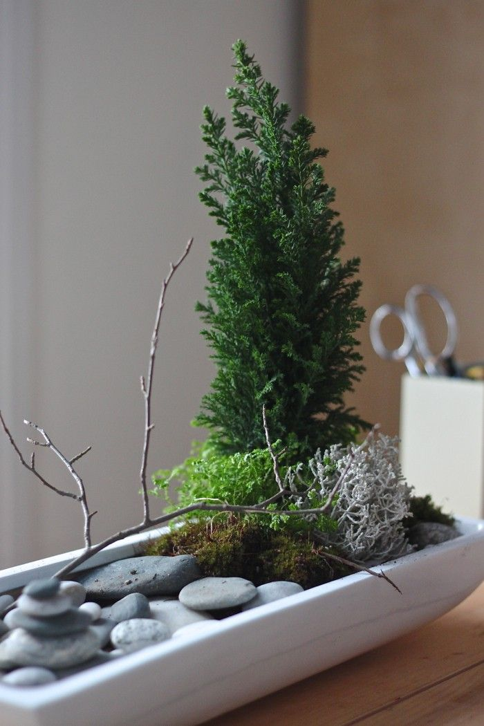 this is perfect for winter and for work... the times when you can't be in your garden. false cypress, desktop zen garden, gardenista: