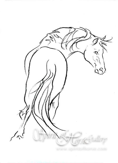 400 best Horse Drawings images on Pinterest