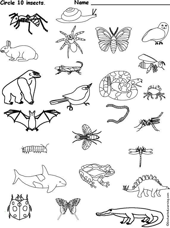114 best Homeschooling: Life Science images on Pinterest