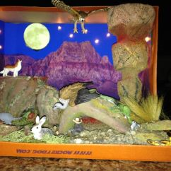 Desert Hawk Diagram Lutron Claro Dimensions Shoebox Diorama Made For 3rd Grade Project | School Displays: City & Country, Habitats ...