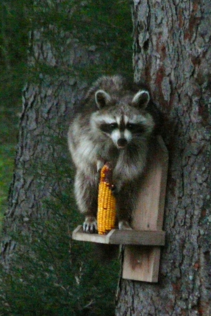 1000 images about Squirrel Feeders on Pinterest  Bird