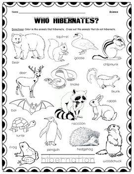 17 Best ideas about Hibernating Animals on Pinterest