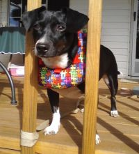 17 Best images about Puppy Bumpers on Pinterest | Shops ...