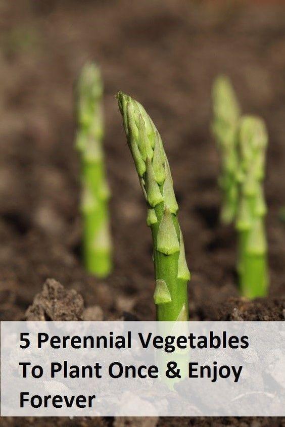 25 Best Ideas About Vegetable Gardening On Pinterest Gardening