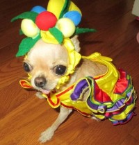 6152 best images about I heart Chihuahuas! on Pinterest ...