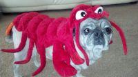 Flounder wearing Sebastian's costume. Sebastian didn't ...