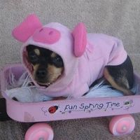 25+ best ideas about Pig Costumes on Pinterest