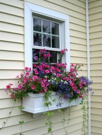 Window Box Contest Entry windowbox | Window Box Contest ...