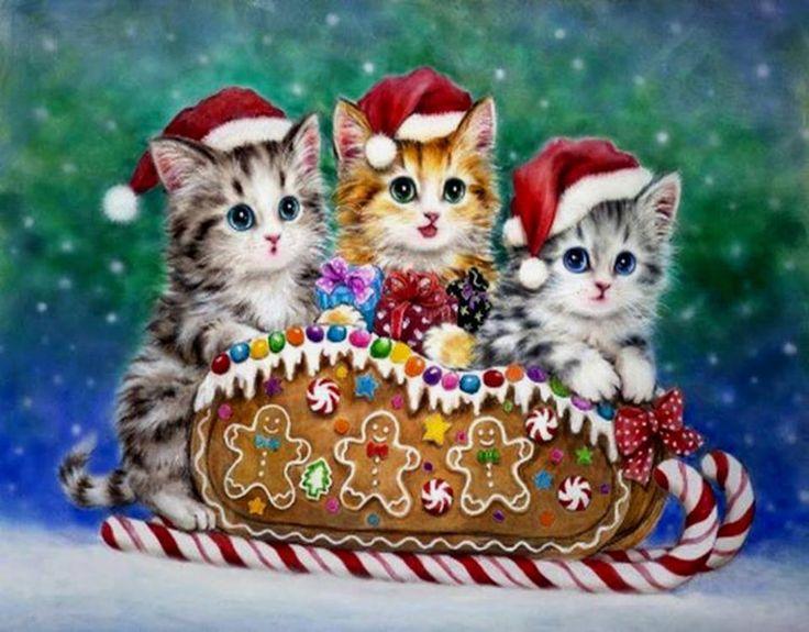 Cute Pet Animals Wallpapers Kayomi Harai Christmas Kitten 960 215 750 Christmas