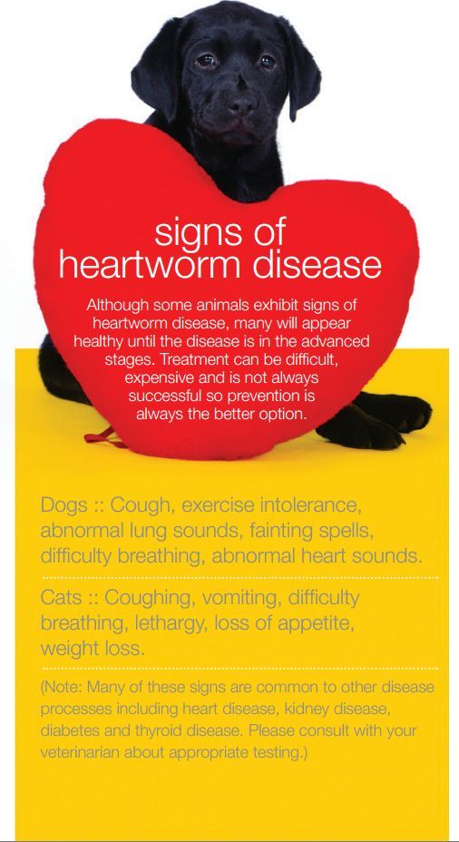 35 best images about Heartworm Disease on Pinterest   Cats ...