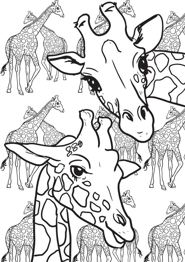 37 best images about coloring giraffes and camels on Pinterest
