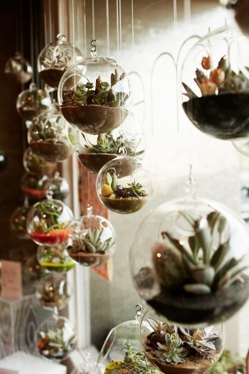 Succulents are easier than air plants, and prettier. I want to hang these in my living room….