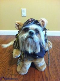 25+ best ideas about Ewok dog costume on Pinterest | Names ...