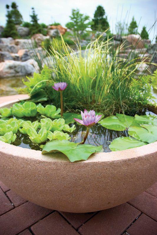 25 Best Ideas About Water Gardens On Pinterest Water Garden