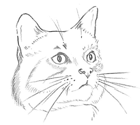 25+ great ideas about Cat face drawing on Pinterest