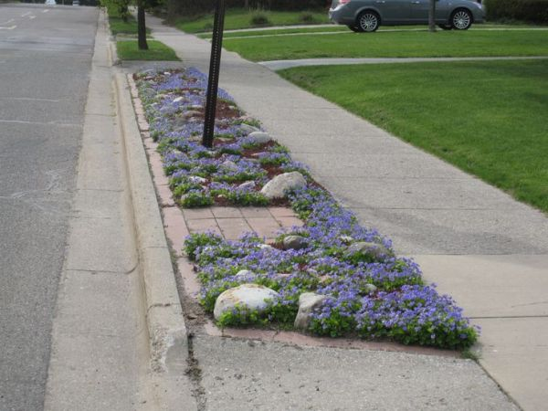 sidewalk strip plantings