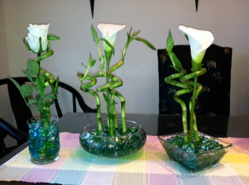 The ojays Lilies and Lucky bamboo on Pinterest