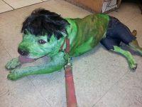 25+ best ideas about Hulk costume on Pinterest | Diy ...