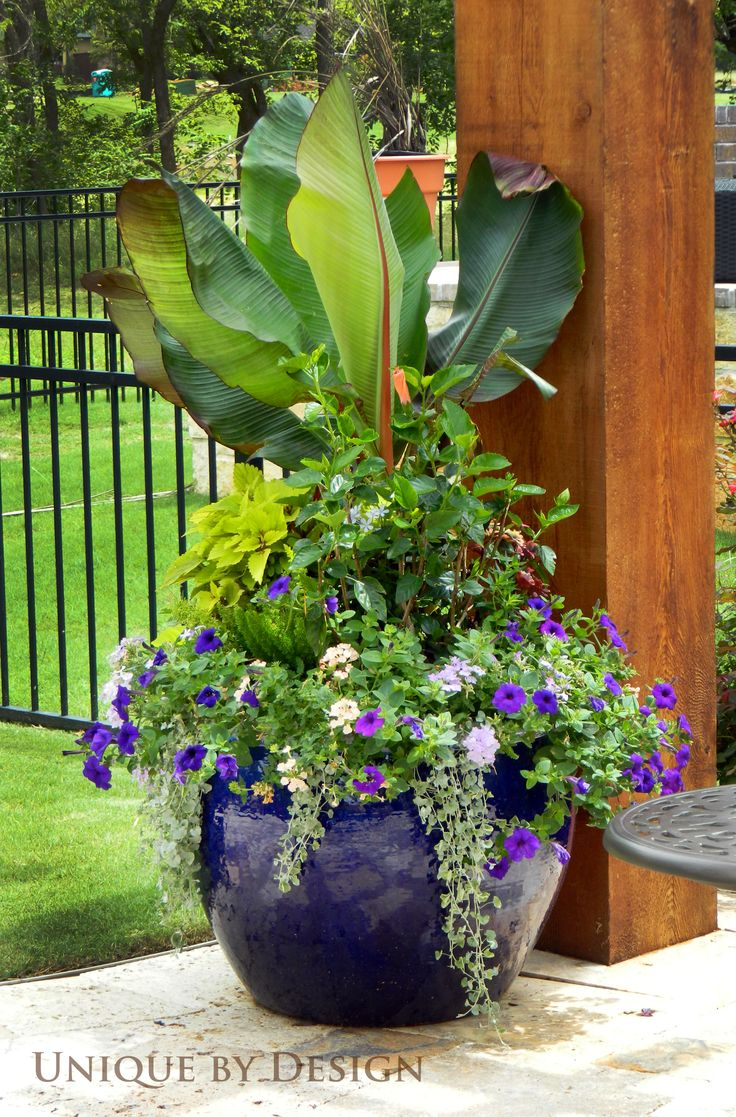 25 Best Ideas About Large Flower Pots On Pinterest Potted