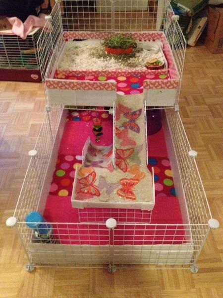 17 Best Images About Guinea Pig Housing Ideas On Pinterest