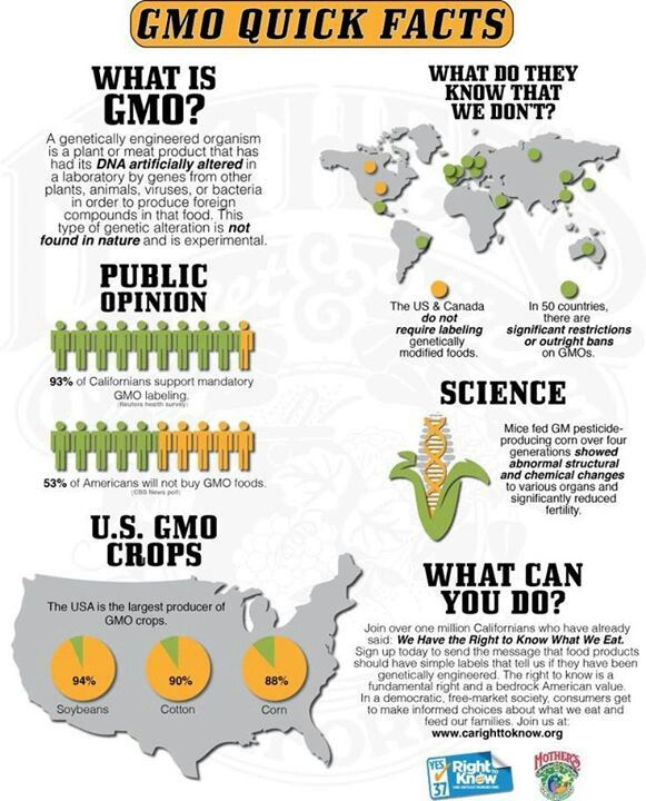 Points to be made about GMOs not in this infographic: -GMO ...