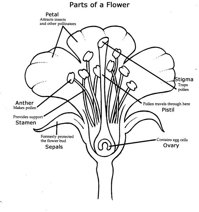 Best 25 Teaching Plants Ideas