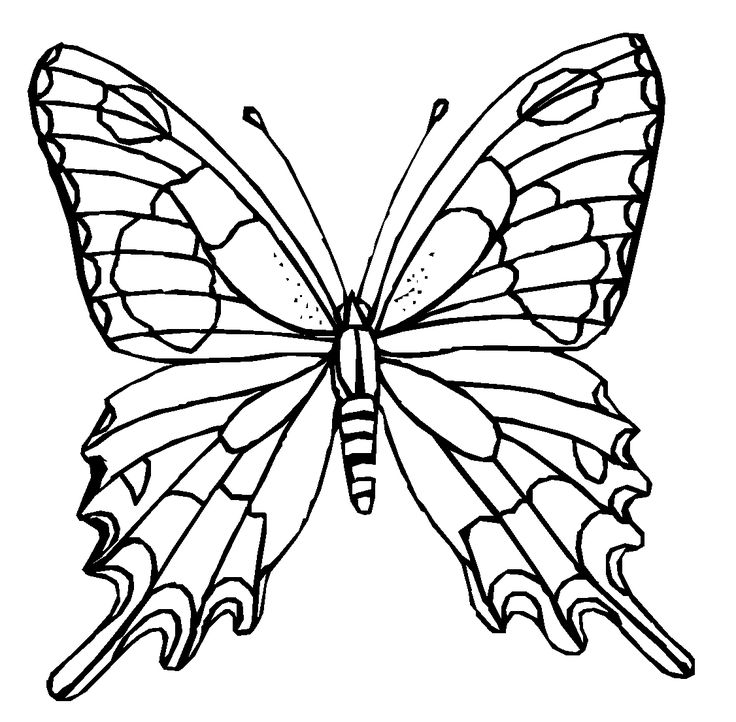 colours drawing wallpaper: Butterfly Cartoone Colour